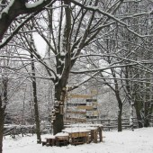 Treehouse-in-snow