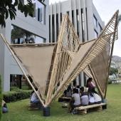 bambu-03
